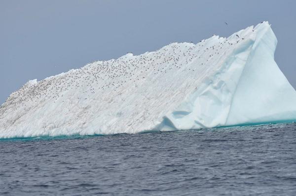 Następna góra lodowa. Dużo ptaków.